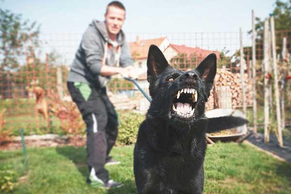 Dog Bite Attack Requiring a Personal Injury Lawyer in Phoenix, Arizona